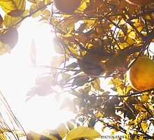 Oranges in the Winter by Courtney Swain
