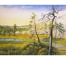 Morning swamp Photographic Print