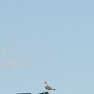 I am here by Rebecca Hessey