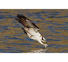 Osprey just before impact Photographic Print