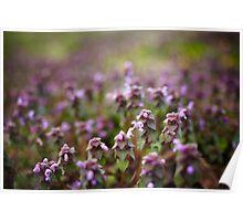 Deadnettle flowers closeup Poster