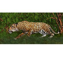 Jaguar Stalking Prey Photographic Print
