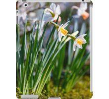 White wild narcissus  iPad Case/Skin