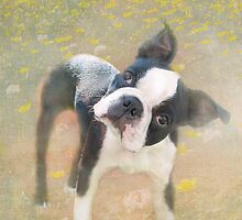 """Dazed and Bewildered """"Greeting Card"""" by Susan Werby"""