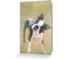 """Dazed and Bewildered """"Greeting Card"""" Greeting Card"""