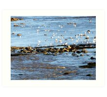 Getting Ready To Roost Art Print