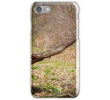 Fallen trees in a forest on springtime iPhone Case/Skin