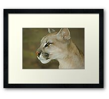 111114 puma cat l Framed Print