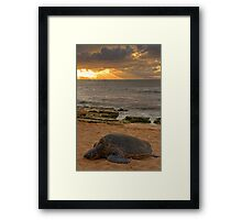 Turtle Rays Framed Print