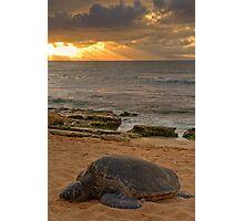 Turtle Rays Photographic Print