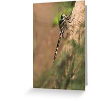 Dragon fly ! Greeting Card