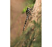 Dragon fly ! Photographic Print