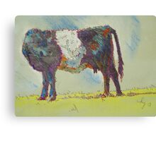 Belted Galloway Cow Canvas Print