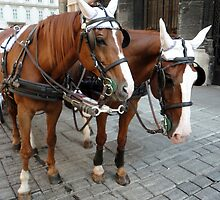 Vienna Austria, St.Stephens Cathedral, Horses by Gregory Dyer