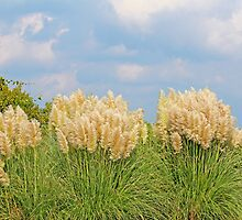 Pampas Grass by Cynthia48