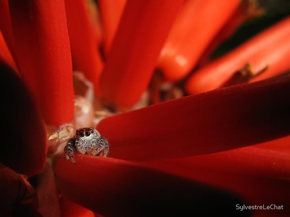 Spider seek by SylvestreLeChat