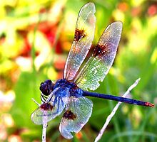 Slightly torn wings by ♥⊱ B. Randi Bailey