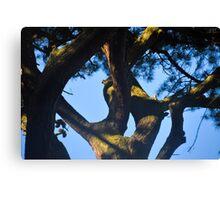 Curvy Tree Canvas Print