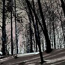 The Shadows of Winter ! by Elfriede Fulda