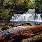 Cotter Force by Stephen Liptrot