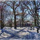 Salem Common  by Monica M. Scanlan
