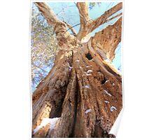 Termite Tree Poster