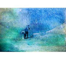 Watercolor Fox Photographic Print