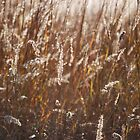 Sunlit Weeds by Mark McReynolds