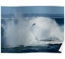 Humpback Whale Breaching 5 Poster