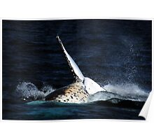 Whale Tail Humpback Whale Tail Poster