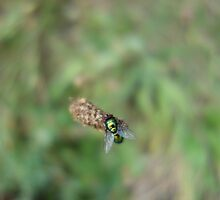 Greenfly by Gentiane