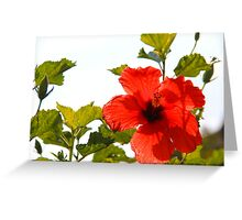 Illuminating In Red Greeting Card