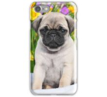 Cute Puppy Caesar the Pug by AiReal Apparel iPhone Case/Skin