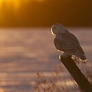 Sunset Hunter by Jim Cumming