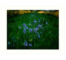 Love, Dream, Wish ~ Wild Camas ~ Art Print