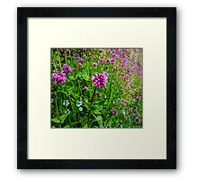 A Touch Of The Wild  ~ Wild Flowers ~ Framed Print