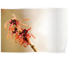 Japanese Witch Hazel Poster