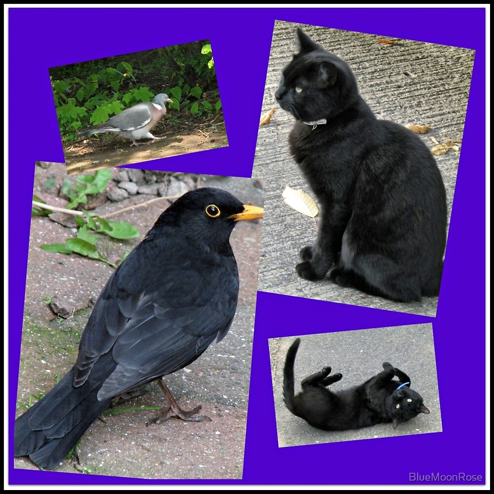 Natural Enemies - Cats and Birds Collage by BlueMoonRose