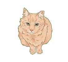 Most Beloved Feral Cat / Ginger Photographic Print