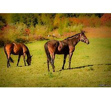 Horses in Mabou Photographic Print
