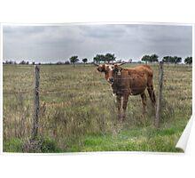 Da Brown Cow Poster