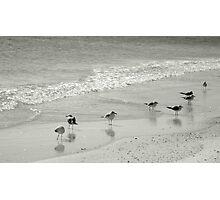 Bird Sanctuary.... Photographic Print