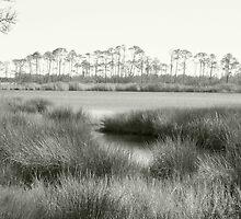 Picturesque Marshy Gulf~ by GraNadur