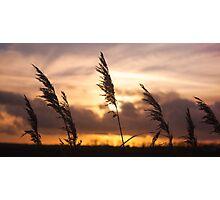 Sunset Night  Photographic Print