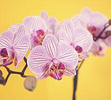 Orchid by Elisabeth Coelfen