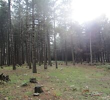 Forest 9 by Furiarossa