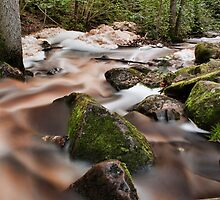 Forest waters by Mark Williams