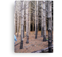 Forest 12 Canvas Print