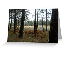 Forest 13 Greeting Card