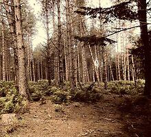 Forest 15 by Furiarossa